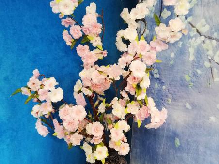 芝店の桜をリニューアルしました。