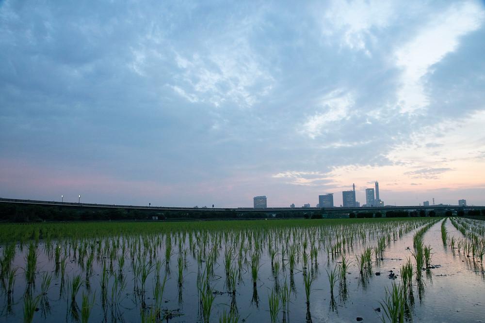 川口市鈴木写真スタヂオカメラマンによる撮影です。