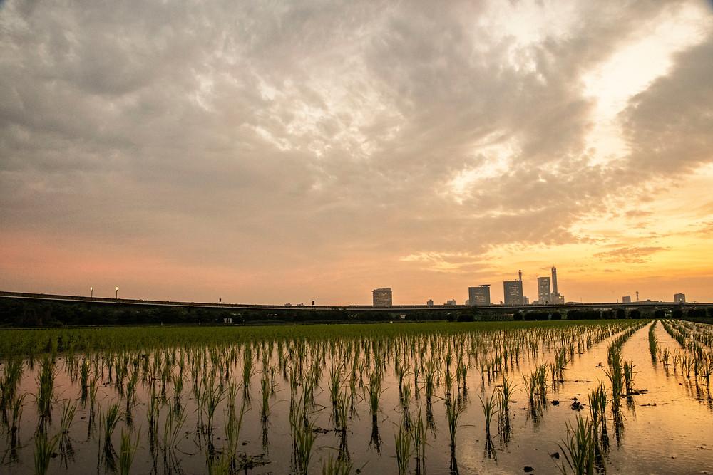 川口市写真館、鈴木写真スタヂオのカメラマンによる撮影です。