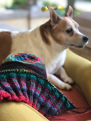 Knitting on the porch with my sidekick Henry.