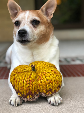 Home decor series: hand knit pumpkin (doggy not included with purchase)!