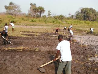 WEEK ONE: FARMER FIELD SCHOOL UNDERWAY