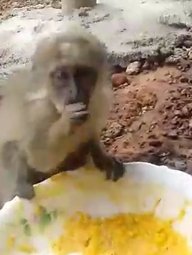 MONKEY BUSINESS: CAUGHT IN THE ACT!
