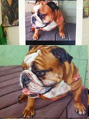 pet portraits bJami Childers