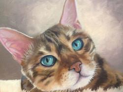Those Kitty Eyes