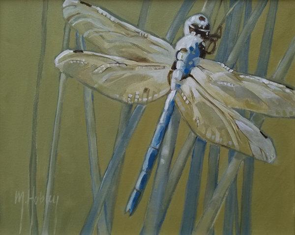 Florida Dragonfly