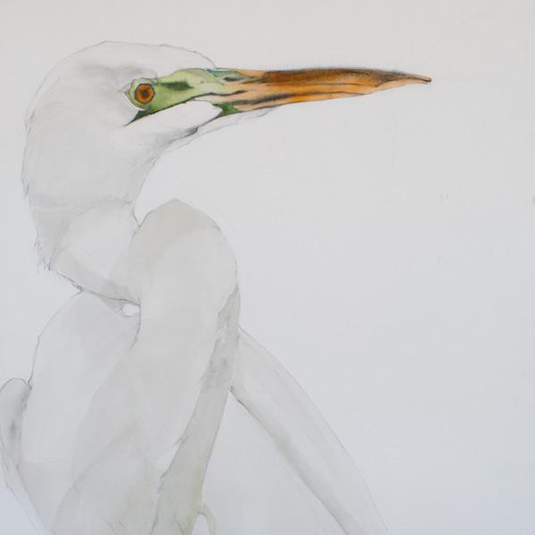 Egret III