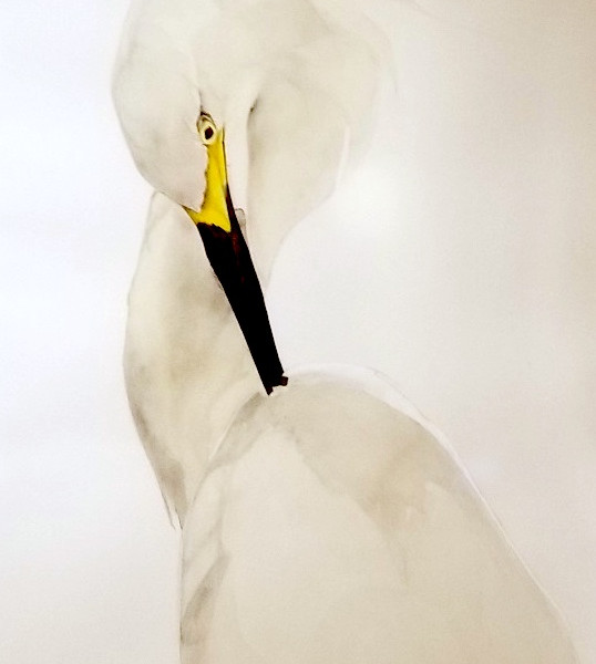 Egret IV