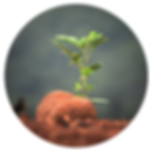 thejourneyicon.png