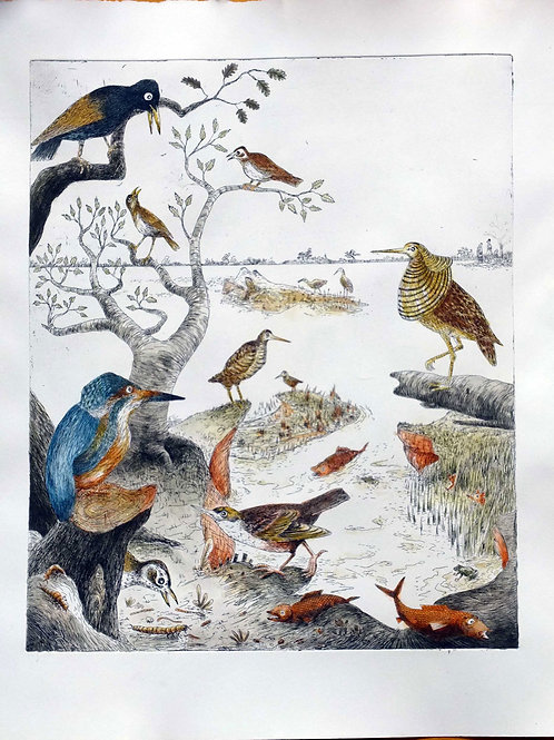 Geschichte der Vögel II Le Martin Pêcheur