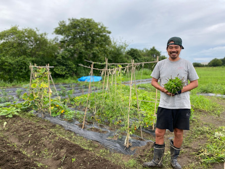 耕作放棄農地の活用…