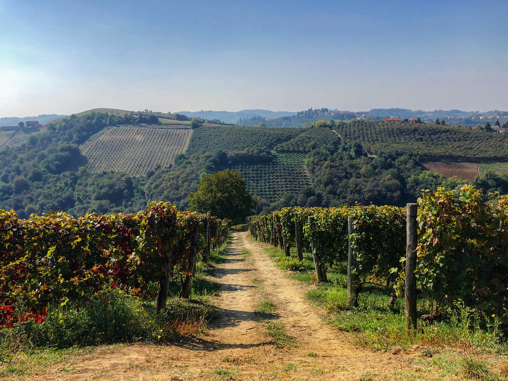 Langhe Barolo Piemonte