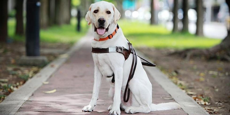 參觀導盲犬訓練中心
