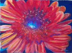 Gerber Daisy, pastel, 8 x 10