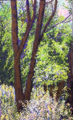 Sunlit Trees, pastel, 12 x 18