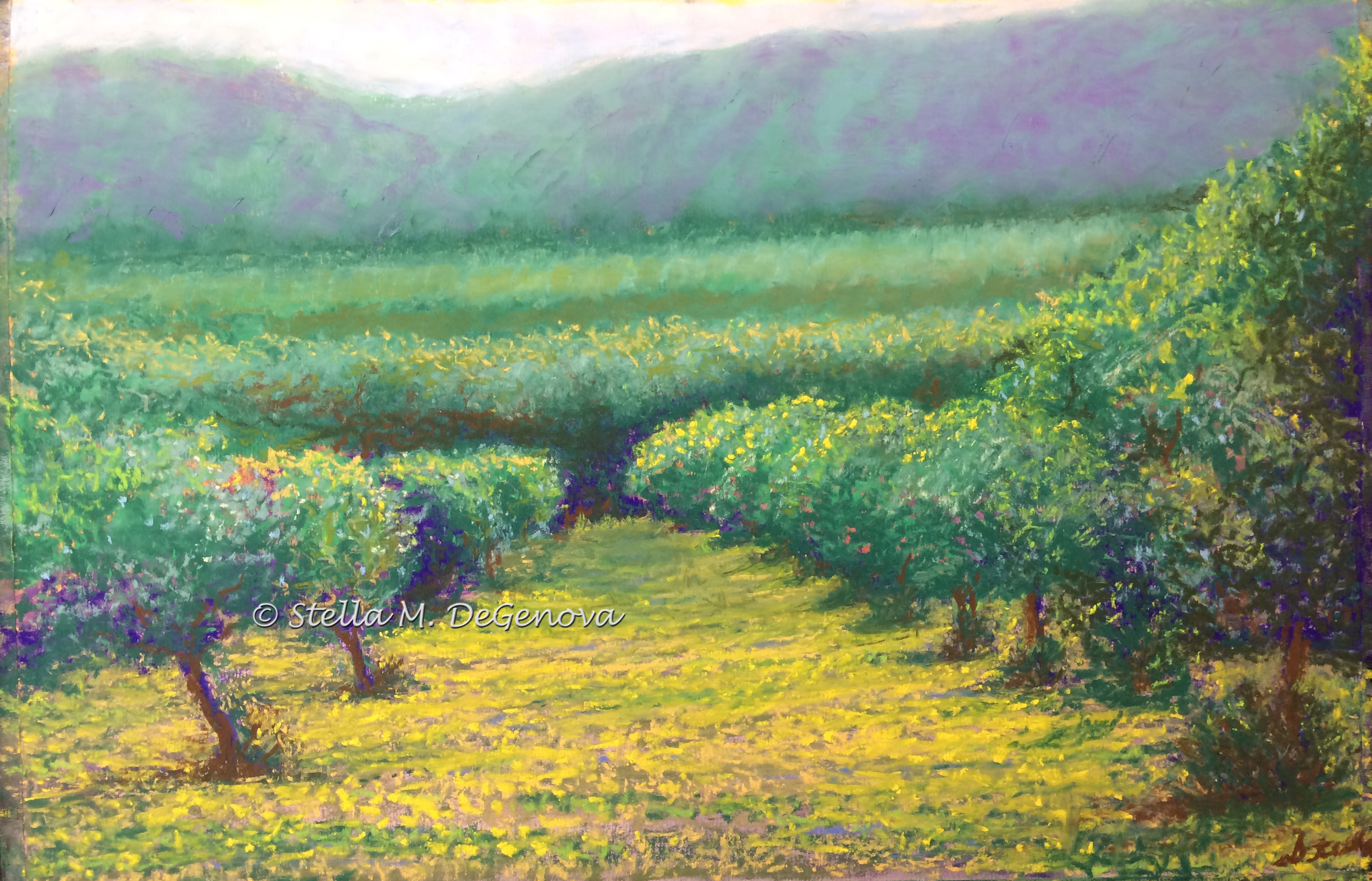 Tuscan Olive Grove, pastel, 16 x 20