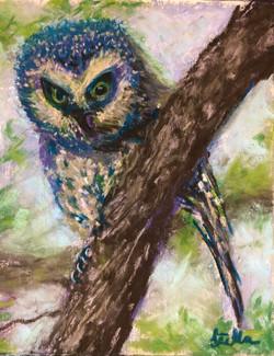 Owl, pastel 6x7