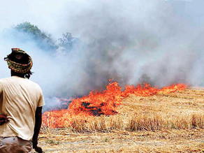 Scrutinizing Stubble burning- What Can be a feasible course of action?