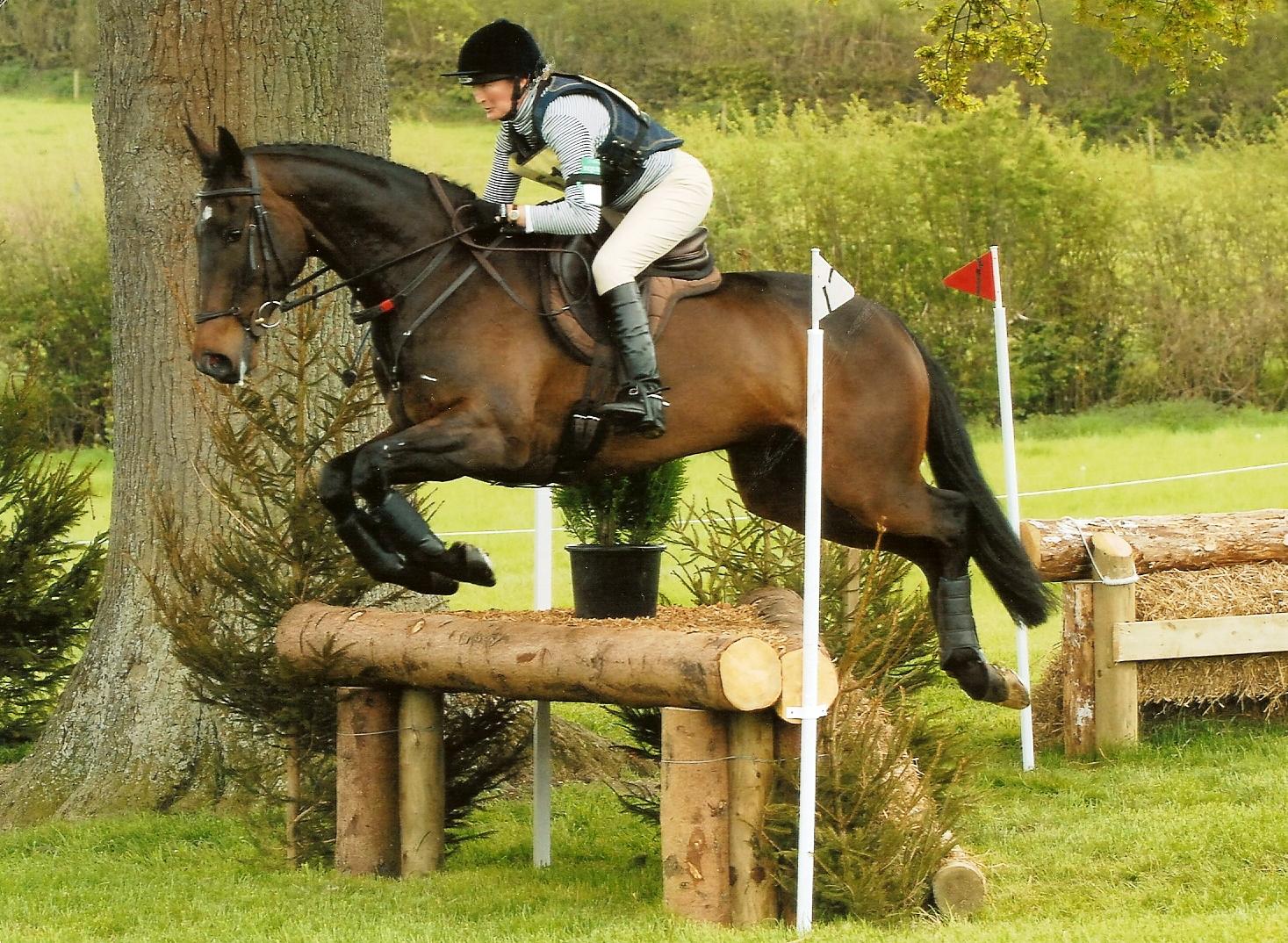 horse5.jpg