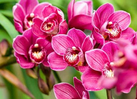 Ministerio de Educación busca gastar 700 mil pesos en orquídeas
