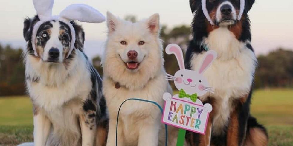 Doggy Easter Egg Hunt