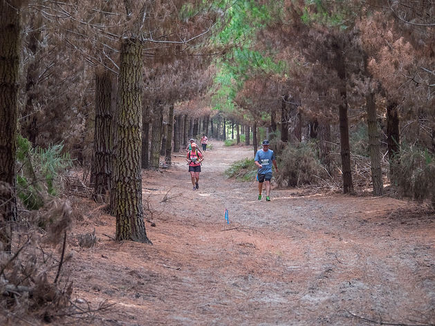 Fusion-Events-Forest-Run-132.jpg
