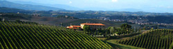 Temecula Winery Vineyard