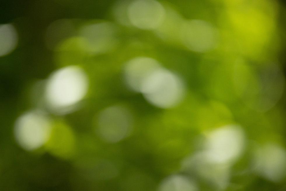 bokeh green.jpg