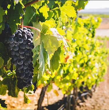 Ribera Fruit.jpeg