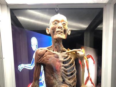 Human Bodies: un viaje al interior del cuerpo, un virus que viaja al interior