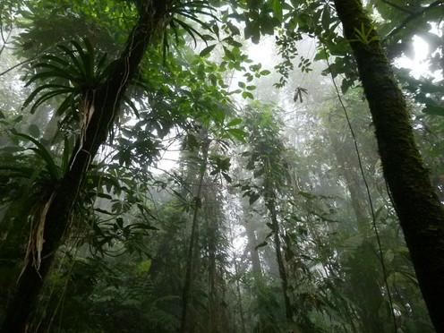 [Paradoja #5] Quién lo creyera, el medioambiente estaba más protegido en el conflicto