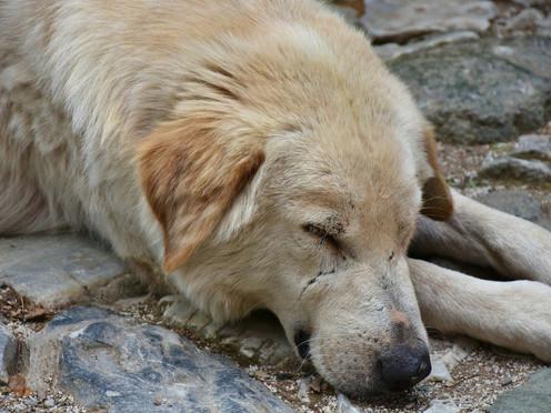 [Podcast] Rescatando a los amigos de cuatro patas
