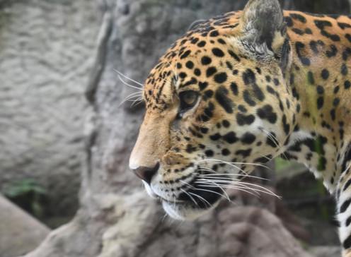 El viacrucis del zoológico del Tequendama