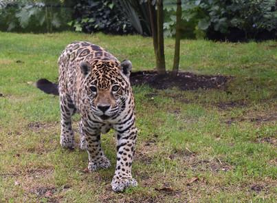 La nueva normalidad de los animales del Parque Jaime Duque