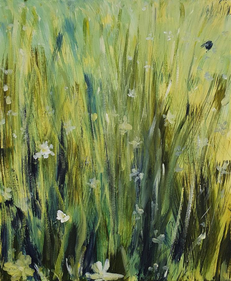 61. Summer Meadow