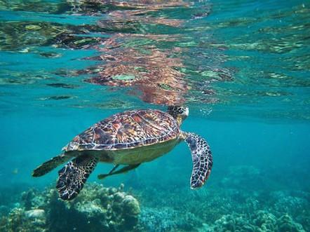 Terra e Mar Turismo Paraty - RJ