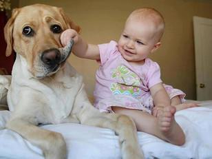 Çocuk ve Hayvan Sevgisi