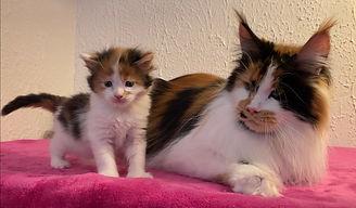 Scarlett & O'Hara Latigun