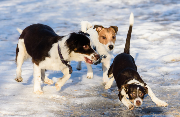 5 things you can do to keep your dog from slipping on ice.