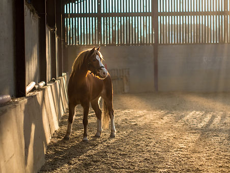 Equine chiropractor
