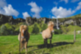 Horse chiropractor