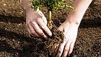 planting_guide_clipart.jpg