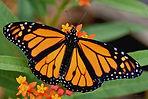 butterfly_guide.jpg