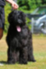 Kitango 9 Monate , schwarzer Briard