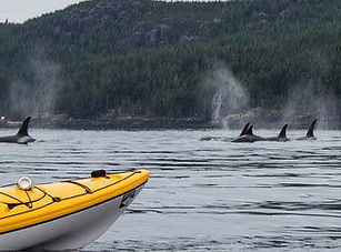 Kayaking_with_Killer_Whales_Orcas.jpg