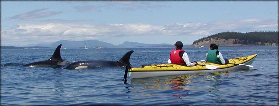 kayak with killer whales.jpg