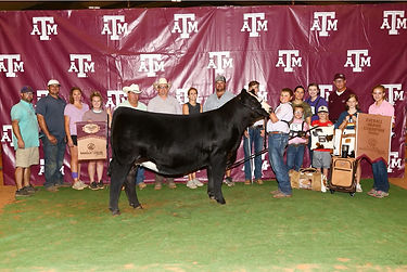 Overall Grand Champion Heifer_Texas A&M