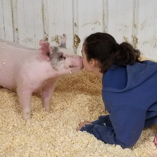 Amanda Gwartney - Animal Kisses Favorite