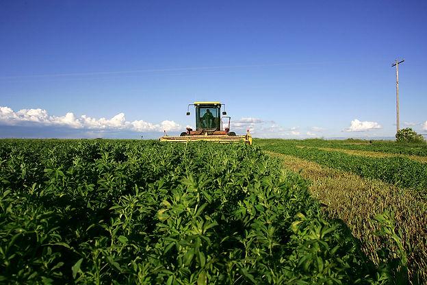 generate-harvesting-alfalfa-crops-iStock