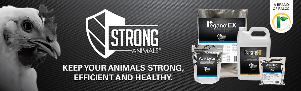 StrongAnimals-Ad-Poultry2.jpg